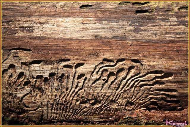 Sculpted in the wood